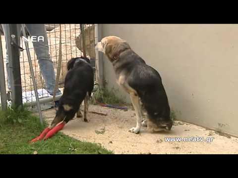 ανάπηρα σκυλιά