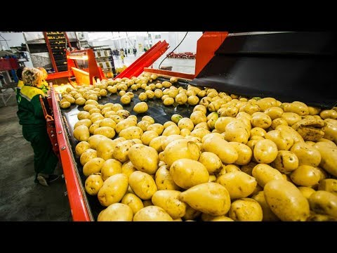 CRAZY FOOD PROCESSING MACHINES 2018 | POTATO