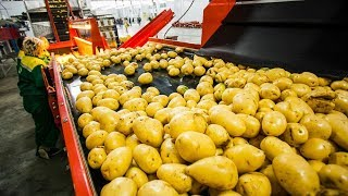CRAZY FOOD PROCESSING MACHINES 2017 | POTATO