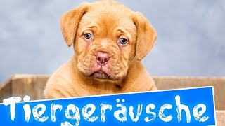 Tiergeräusche für kinder | 35 echte Tiere | Deutsch
