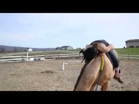 Appendix horse jumping 3'2