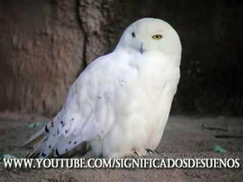 Que significa soñar con pajaros - YouTube