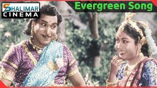 Evergreen Hit Song of the day    Sundari Neevanti Video Song    shalimarcinema    Shlimarcinema