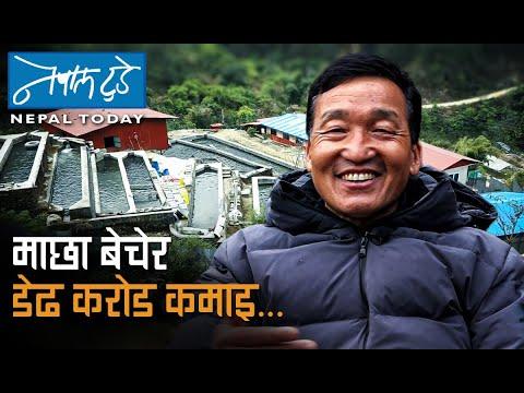 माछा बेचेर डेढ करोड कमाइ  [ The Nepal today ] Agriculture in Nepal