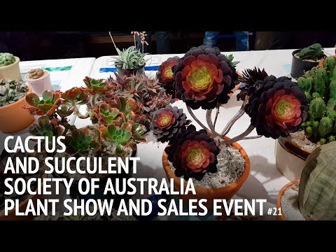#20 Cactus and Succulent Society of Australia plant show and sales event