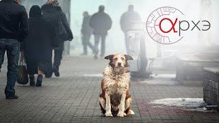 Андрей Тупикин: 'Бездомные собаки глазами биолога'