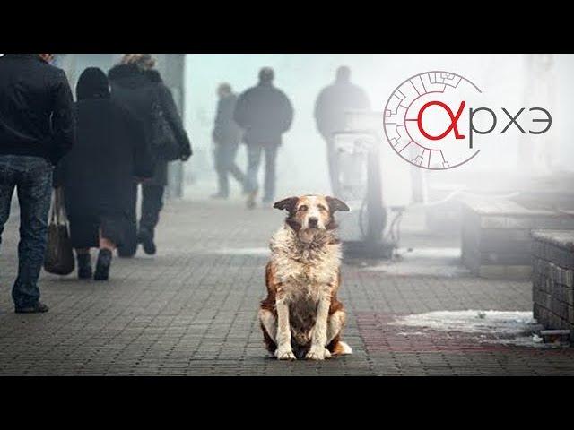 """Андрей Тупикин: """"Бездомные собаки глазами биолога"""""""
