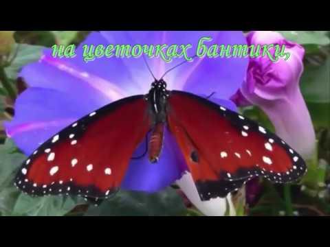 Вопрос: Как летает бабочка Как технически устроен полет бабочки?