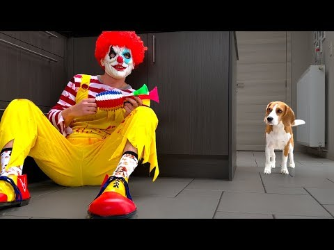 CLOWN vs. DOGS PRANK : Funny Dogs Louie and Marie