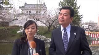 茨城放送 スクーピーレポート 「土浦桜まつり2013」