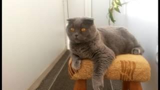 Можно ли брать в дом взрослую кошку?