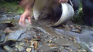 day 1 Canvastown Gold Prospecting