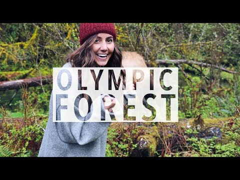 Magical Forests & Beaches // Olympic National Park