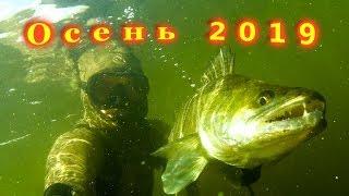 Подводная охота 2019.  Осень.  Завалы. Судаки, сазаны, щуки.