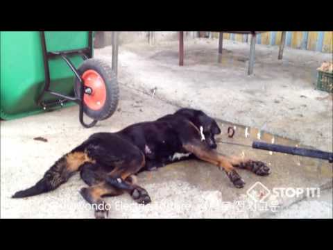 Shocking Cruelty of Gangwon-do Province, South Korea Dog Meat Industry