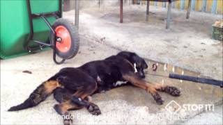 Repeat youtube video Shocking Cruelty of Gangwon-do Province, South Korea Dog Meat Industry