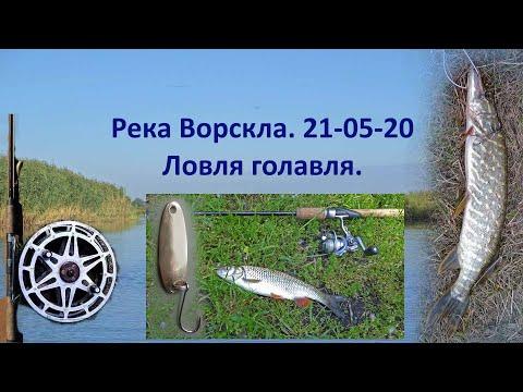 Дневник рыболова  Ловля голавля  Река Ворскла  21 05 20