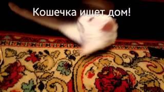 Белая кошка в добрые руки!