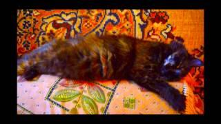 Кошка спит приоткрыв наполовину один глаз