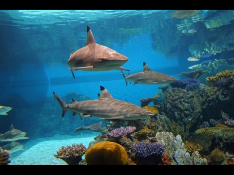 Top 10 Best And Most Amazing Aquariums in the U.S.A World ...