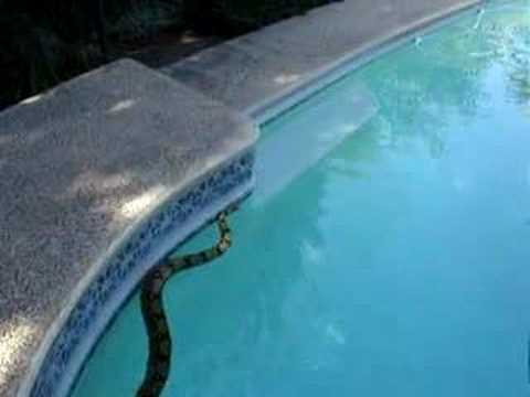 Can a snake swim youtube for Can u get pregnant in a swimming pool