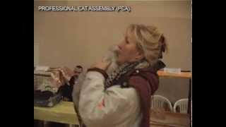 Кошка породы флэппиг - Выставка кошек PCA