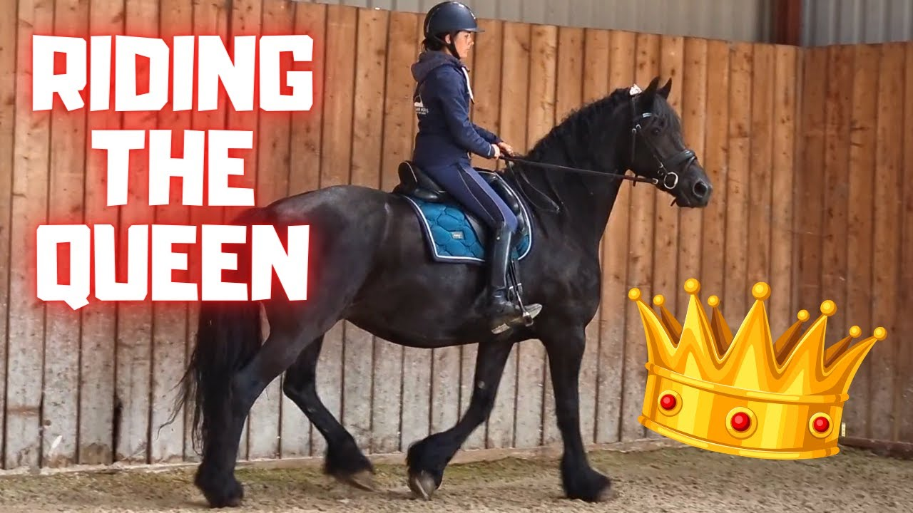 Riding Queen👑Uniek for the first time since Rising Star⭐ | Johnny as new | Friesian Horses