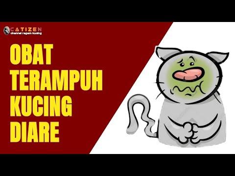 cara-mengobati-kucing-yang-mencret-secara-alami---how-to-cure-cat's-diarrhea-naturally-(eng.-sub)