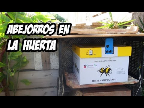 Como Instalar una Colmena de Abejorros | Polinizadores Naturales | La Huerta de Ivan