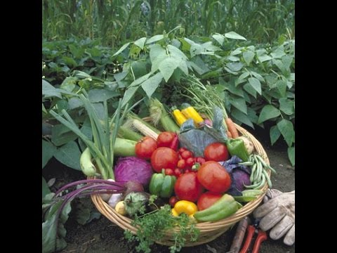Vegetables to Grow in Your Organic Terrace Garden