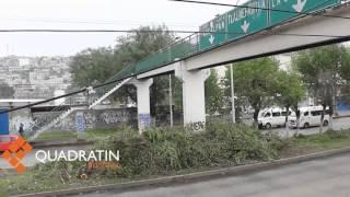 Derriban árboles de vía López Portillo por obras del Mexibús