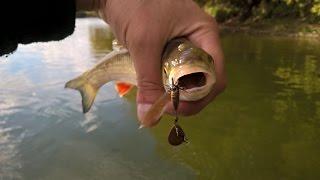 Голавль на р. Десна или хорошая рыбалка.(Целью этой рыбалки было испытание спиннинга Major Craft Finetail Area. Голавль порадовал. Реферальная ссылка: http://join.air..., 2016-09-25T12:14:44.000Z)