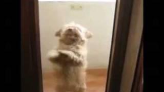Srandomat.cz - Tančící pes / Mambo pes