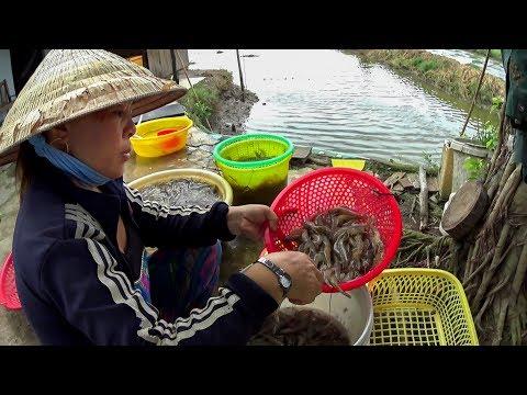 Cánh đồng Chó Ngáp (Bạc Liêu) || Dog Yawning Field || Vietnam Discovery Travel
