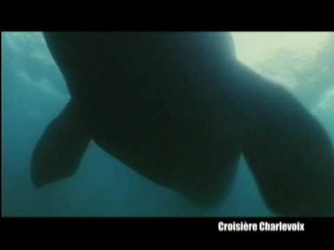 hqdefault - Pourquoi les baleines ne souffrent-elles pas du mal des caissons ?