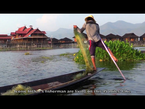 Inle Heritage  - A Burmese Cat Story