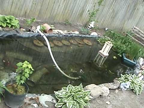 My new 1800 gallon koi turtle pond youtube for Koi pond gallons