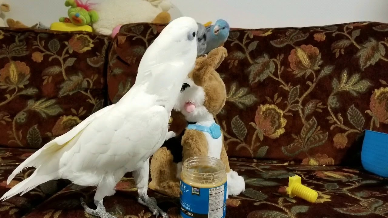 Two funny birds Joseph & Tiago