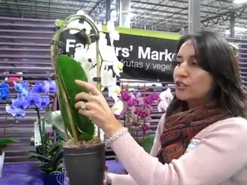 Orchid Cascades By Silver Vase Bell Nursery Youtube