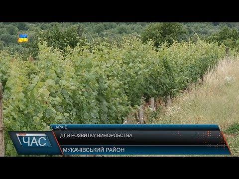 Телекомпанія М-студіо: Для розвитку виноробства