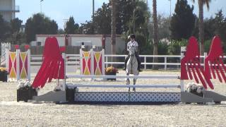 Toupie de Cantraie Olivia Nova 7 year old competition Oct 2014