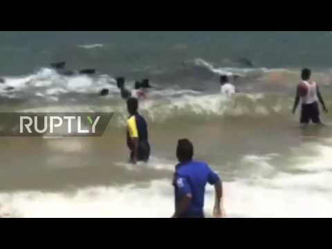 Sri Lanka: Beached whales helped back to sea by locals