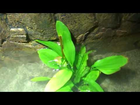 Berühmt Wasserpflanzen Einsetzen Aquaterarium Wasserschildkröten - YouTube @DD_23