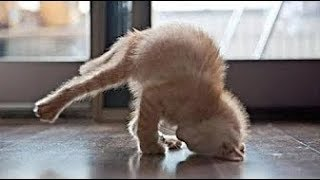 Funny Cats and Dogs Compilation p95