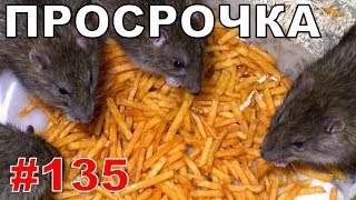 """#135. Реалити Шоу """"ALCARATZ"""". ДОМ 2 - Крысы. Просрочка"""