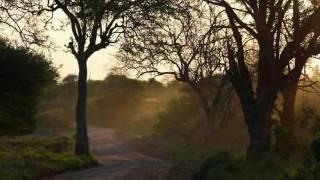 Sons da Natureza - Vendaval e aves da mata africana