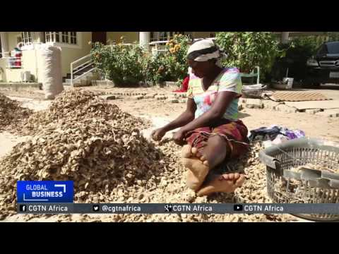 Efforts to restore ginger production after years of neglect kick off