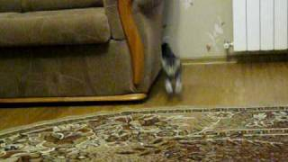 Видео котята.avi