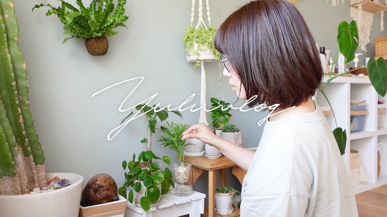 【日常Vlog】私の癒し時間。観葉植物を買いに行って、モリンガの種植えた。【GHB fukuoka effect】