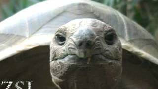 Mathilda the friendly giant tortoise